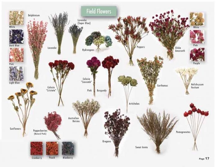 Dried Flowers Wholesale