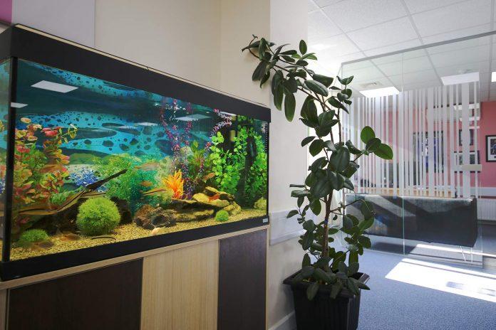 online aquarium plants