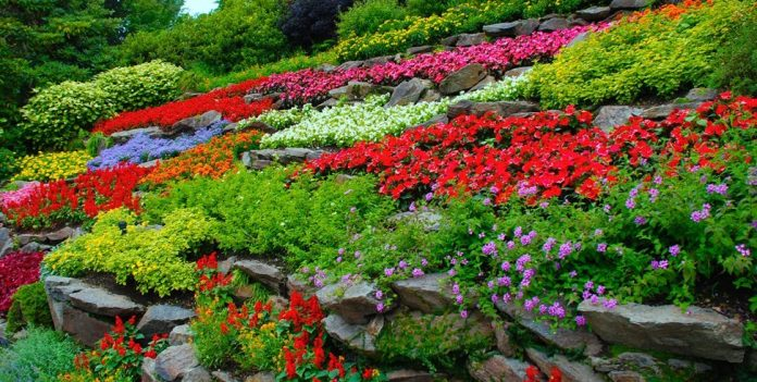 Start your garden with these beginner-friendly flowers